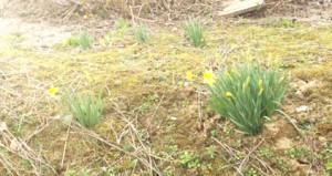 0401墓地公園の春